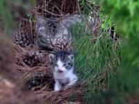 Cat_0906071
