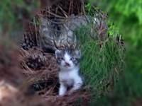 Cat_0906072