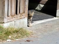 Cat01_090926