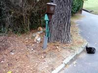 Cat_091121