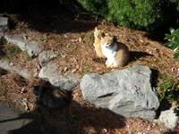 Cat_0912181