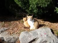 Cat_0912182