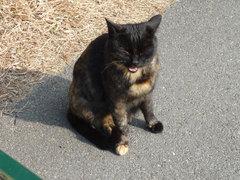 Cat_110109