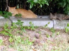 Cat_07282