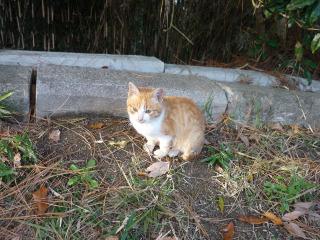 Cat_111204